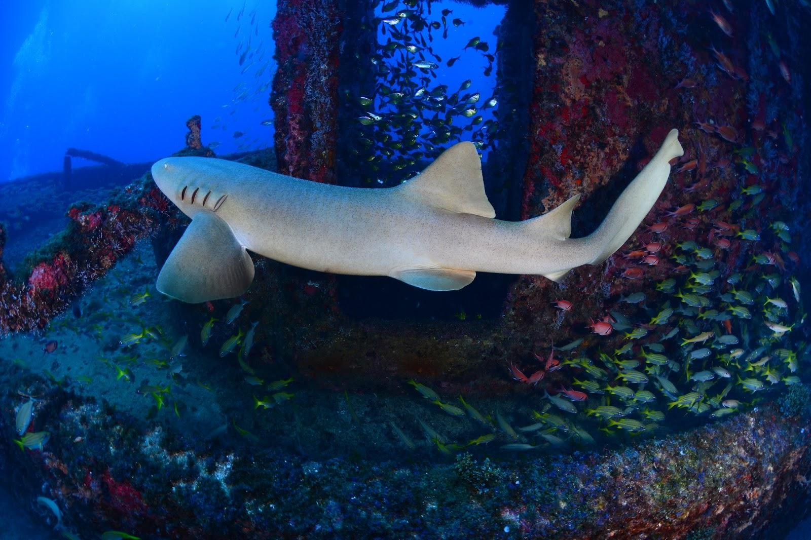Diana teran fotos fant sticas del fondo del mar peces - Fotos fondo del mar ...