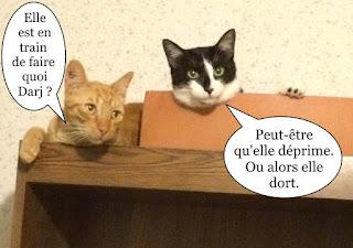 Deux chats sur une armoire.