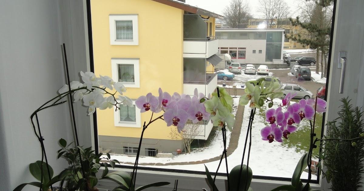 Passato e presente la nostra finestra dei fiore si arrichita di una nuova orchidea - Aprire una nuova finestra ...