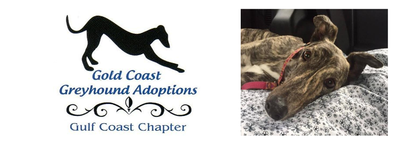 Gold Coast Greyhound Adoptions Gulf Coast Chapter