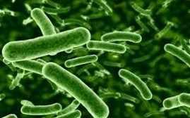 Bacteria de la Sífilis