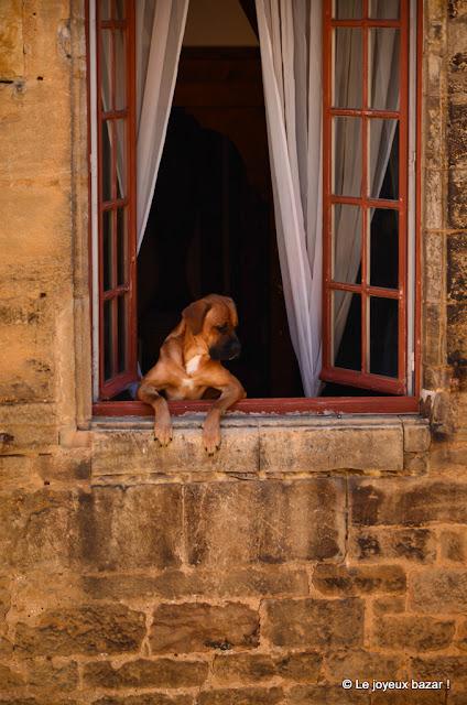 week end en Perigord  - Sarlat - chien