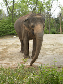PICS FROM PAST WEEKS: Elephants at the Zoo