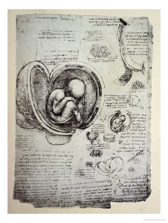 La mouche 3 fois rien anatomie de mon coeur for Anatomie du meuble