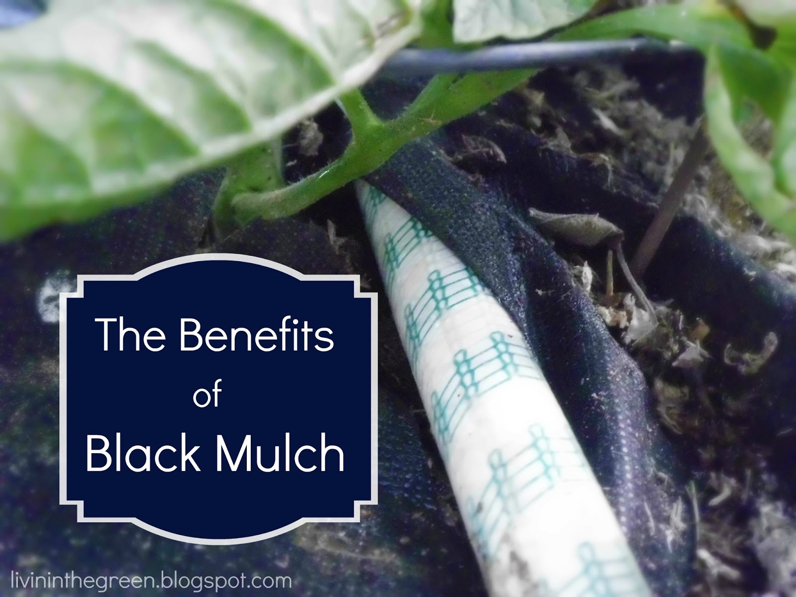 The Benefits Of Black Mulch
