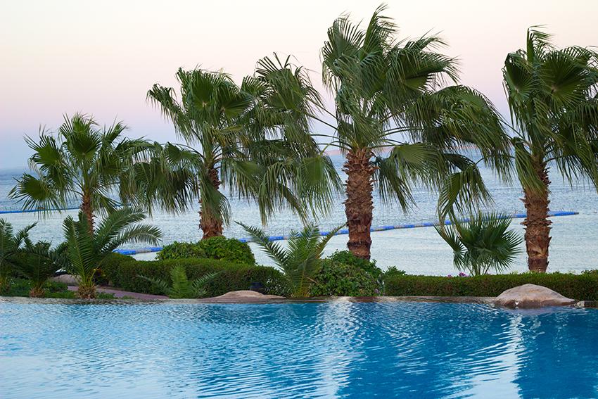 бассейн пальмы