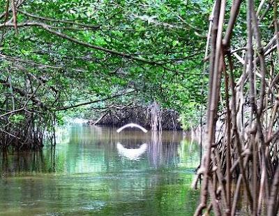 Ecosistemas frágiles de Ecuador