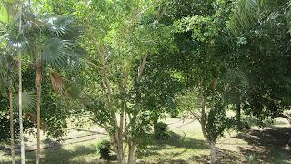 Parc Juan Ponce de Leon