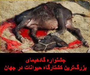 جشنواره گادهیمای؛ بزرگترین کشتارگاه حیوانات در جهان