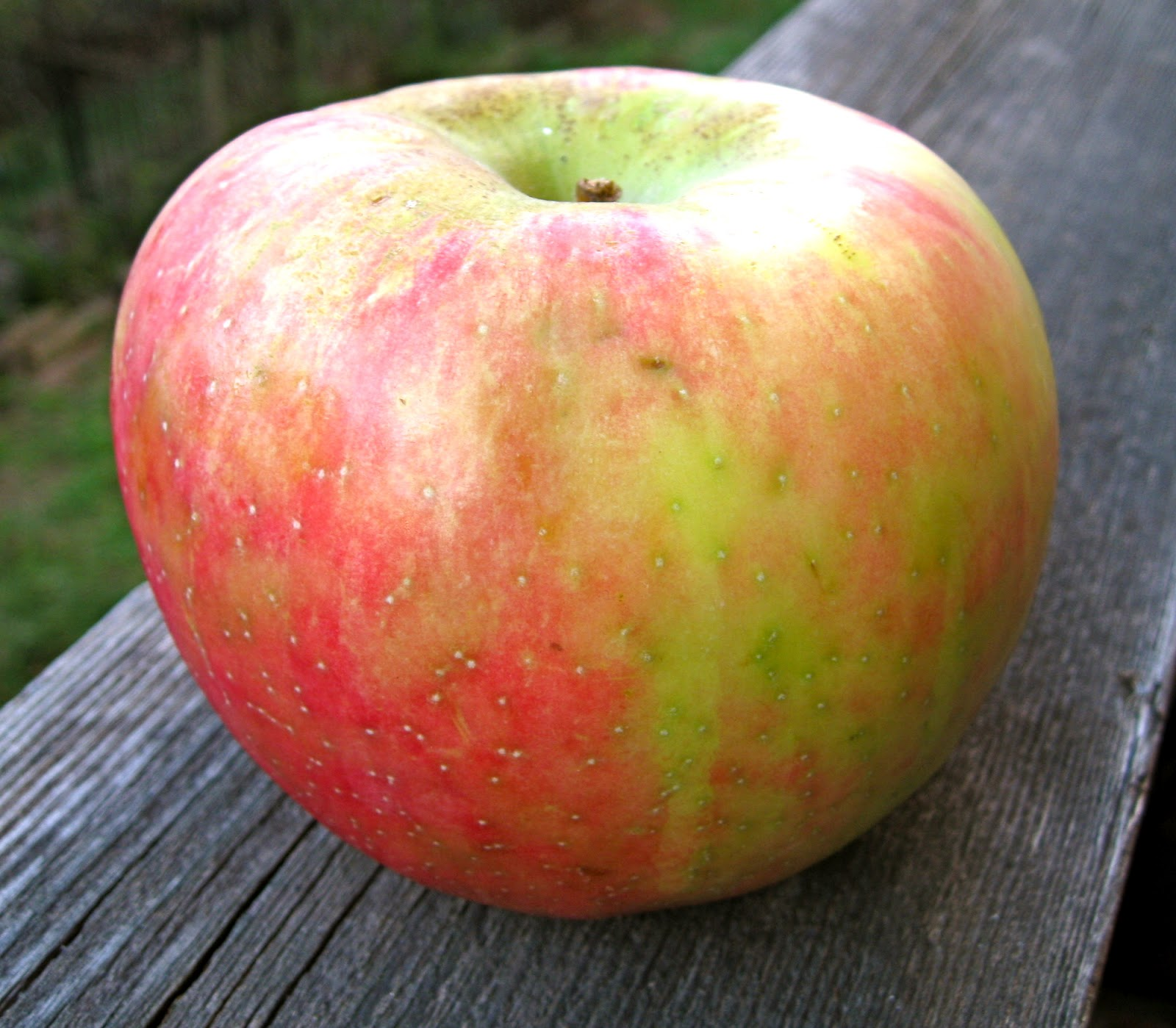 The Ugly Apple   WYPR