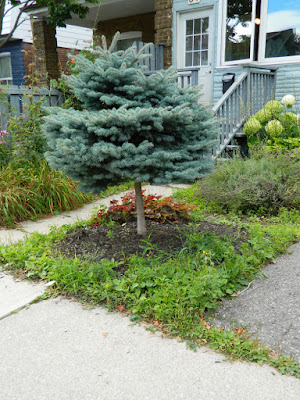 Leslieville Toronto front garden cleanup before Paul Jung Gardening Services