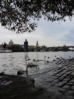 Blick auf Karlsbrücke mit Schwänen