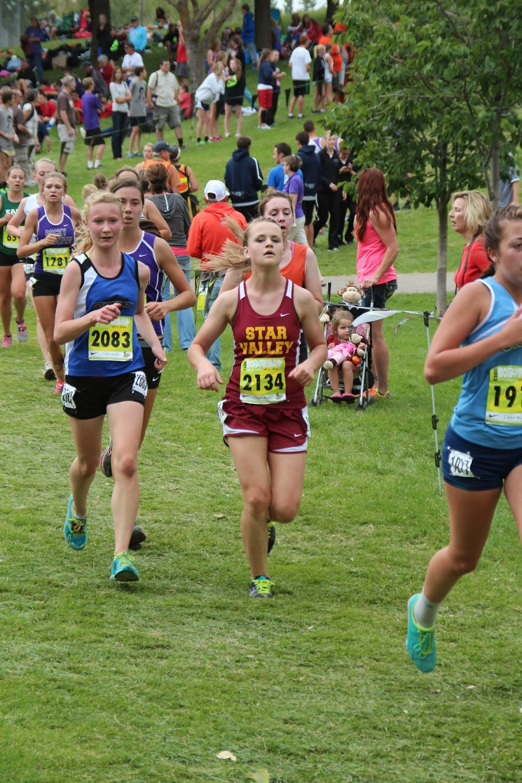 tiger grizz cross country meet distance