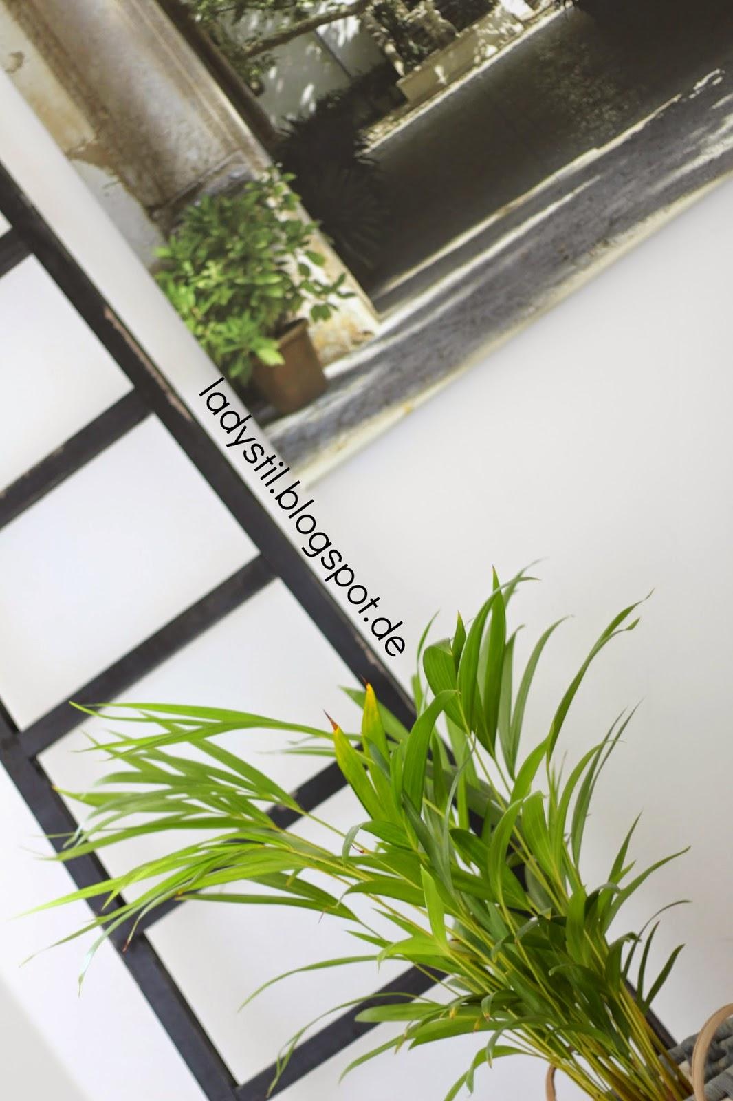 Schräges Bild der Leiter mit Leinwand und Pflanze