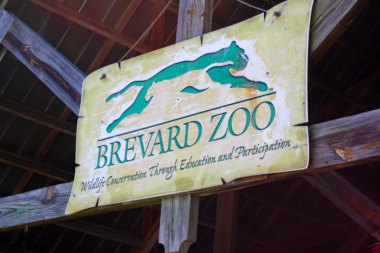 #ad #BrevardZoo #Florida