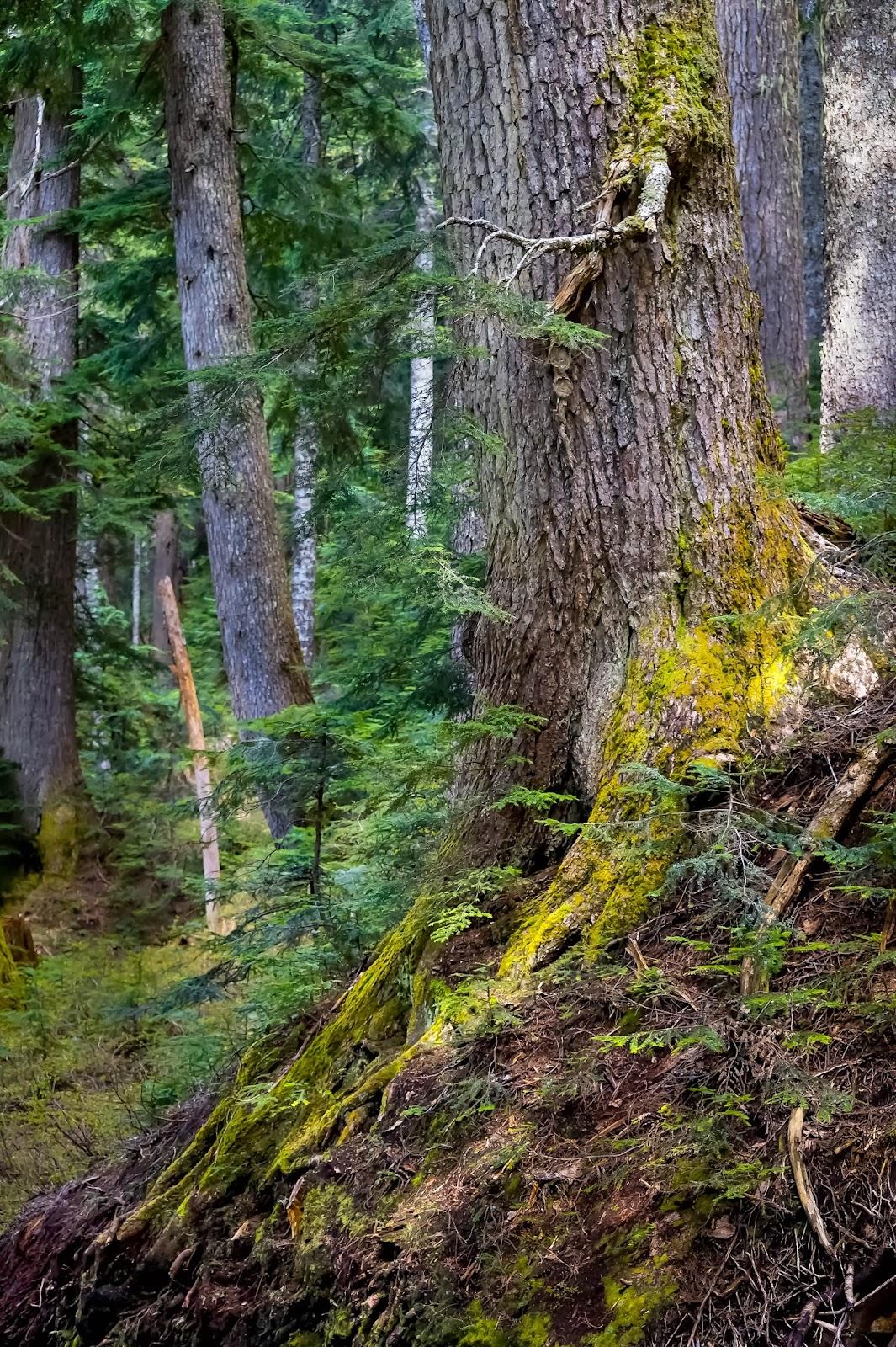 Живописные корни деревьев