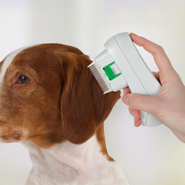 High-Tech Gadgets For Your Dog (15) 12