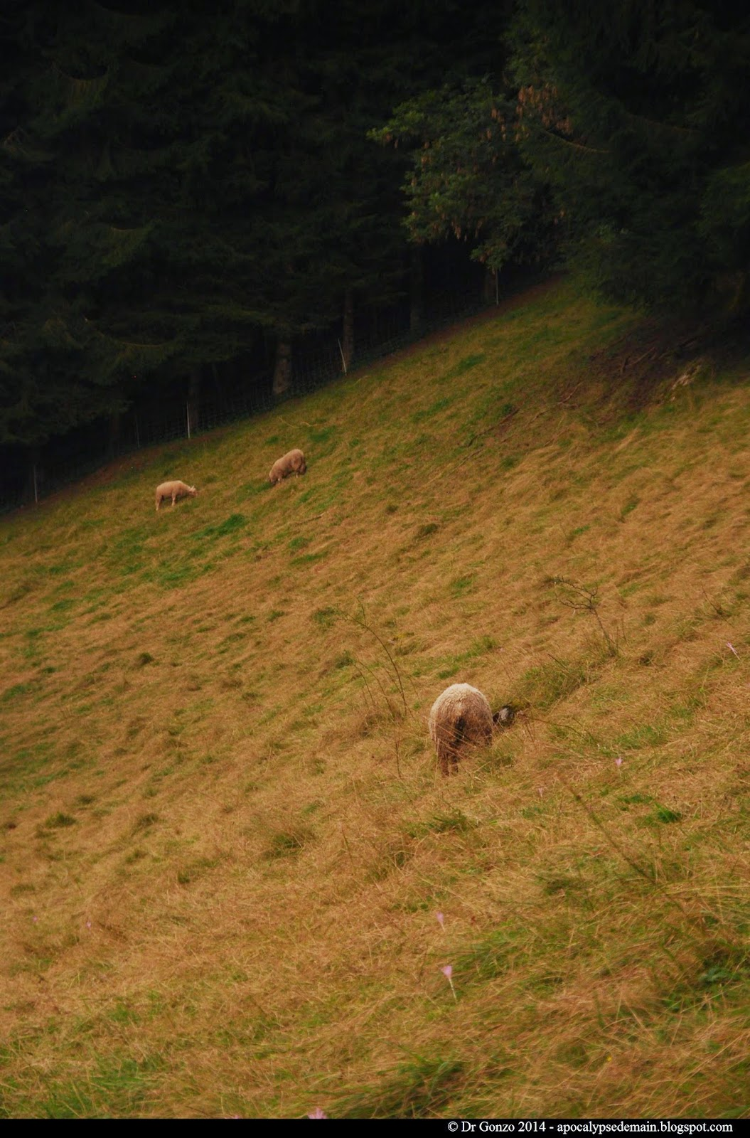 sheep moutons savoie Alps sépia