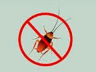 Cara Mudah Membunuh Kecoa Secara Alami