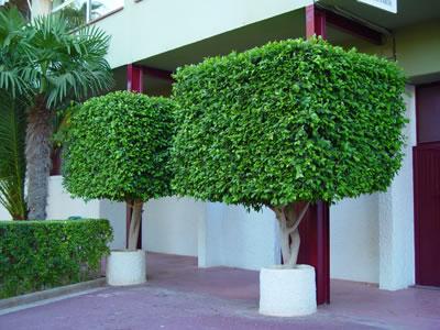 Bindack arquitectura digital arboles oriundos contra la for Arboles para jardin