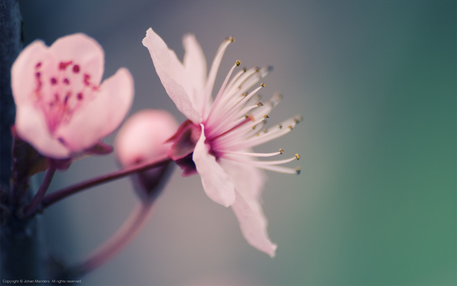 spring flowers background you - photo #42