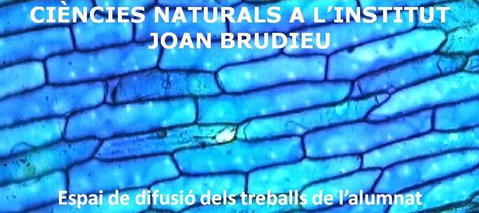 Ciències Naturals a l'Institut Joan Brudieu