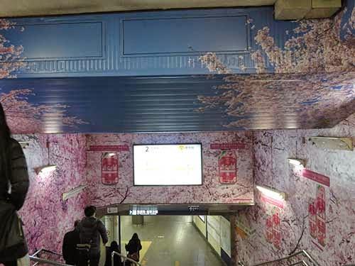 東京メトロ銀座線の上野駅に桜が彩った001
