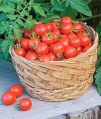Tu salud los mejores tomates para cultivar en maceta - Tomates cherry en maceta ...