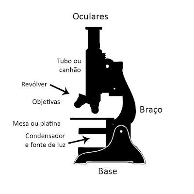 Componentes do microscópio óptico