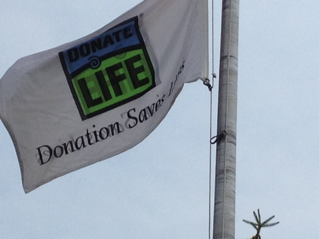 Organ Donors - In Power