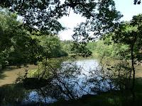 ランブイエの森 王様の池