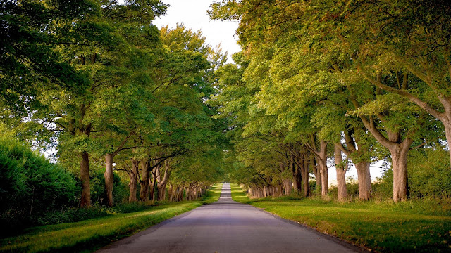 Kings Avenue Sandringham Norfolk England Trees Road HD Wallpaper