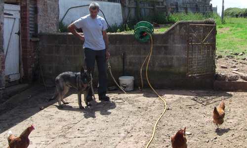 Paul Glennon and Murphy in a farm yard of chickens. Murphy watchs with interest