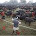 Is Animal Sacrifice Permissible in Hinduism? + पशु हिंदू धर्म में अनुमति बलिदान किया जाता है?