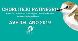 Chorlitejo patinegro, ave del año 2019