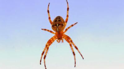 Terungkap Misteri Hujan Ribuan Laba-laba di Langit Australia