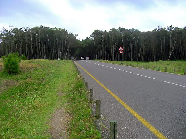 Sendero en Parque Natural Dunas de Liencres