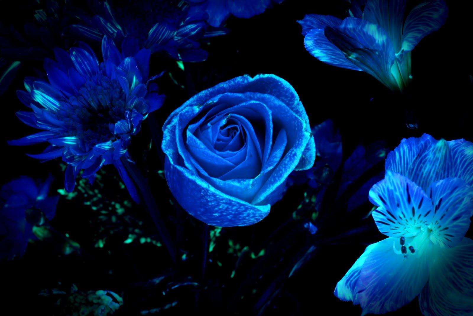 glow dark blue wallpaper - photo #31