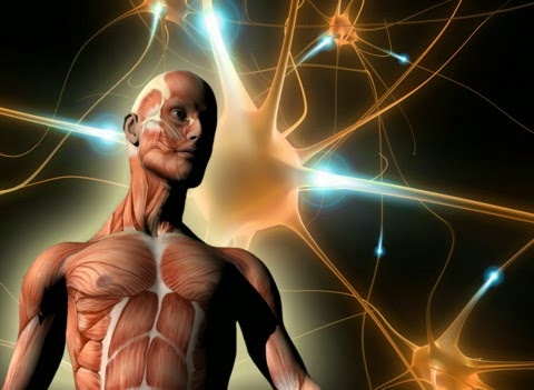 6 Amazing Facts about the Human Body!