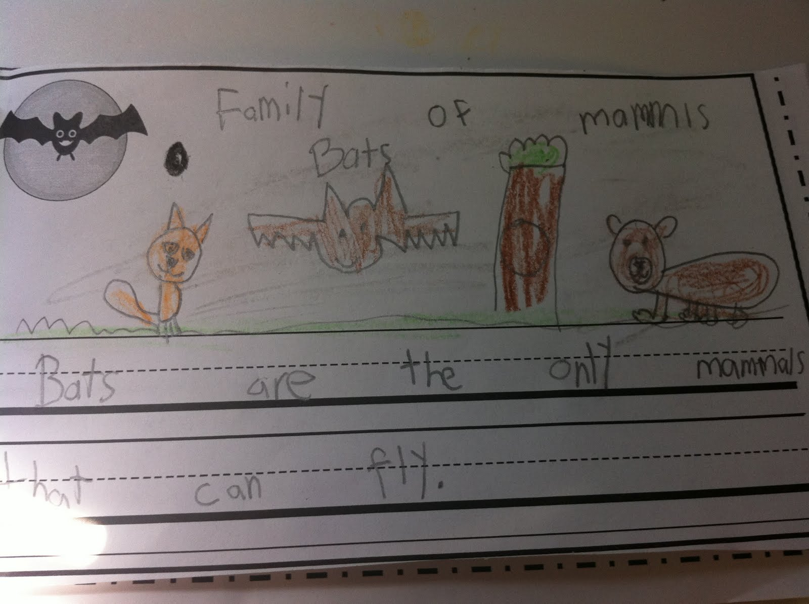 the adventures of a k 1 teacher bats and spiders