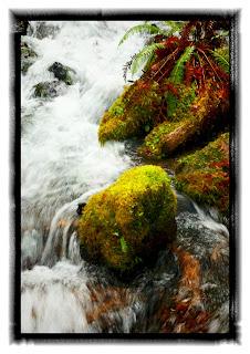 hoh creek
