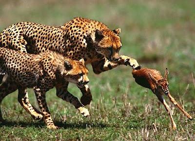 Hunting animals pics