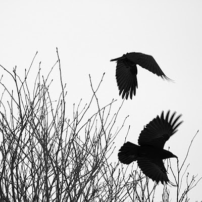 Flight by Martin Cathrae, Creative Commons License