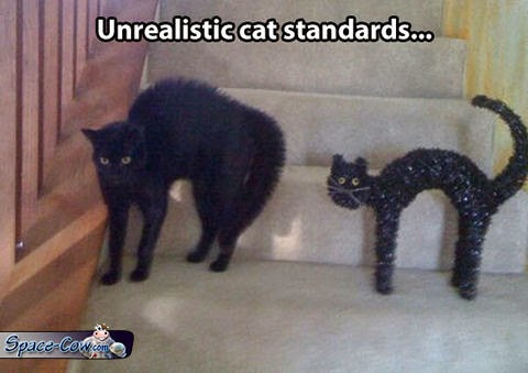 funny things cats pics