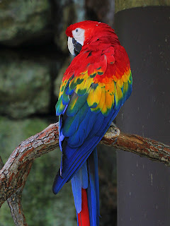 Macaw + Duplicate Level-Adjusted 199,87;  Mode Color; Opacity 100%