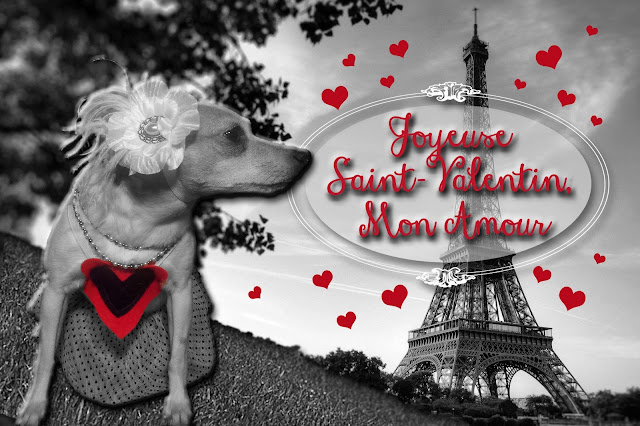 Valentine's Day, Paris, Dog, Chihuahua, Hearts, Eiffel Tower, Pampered Dog