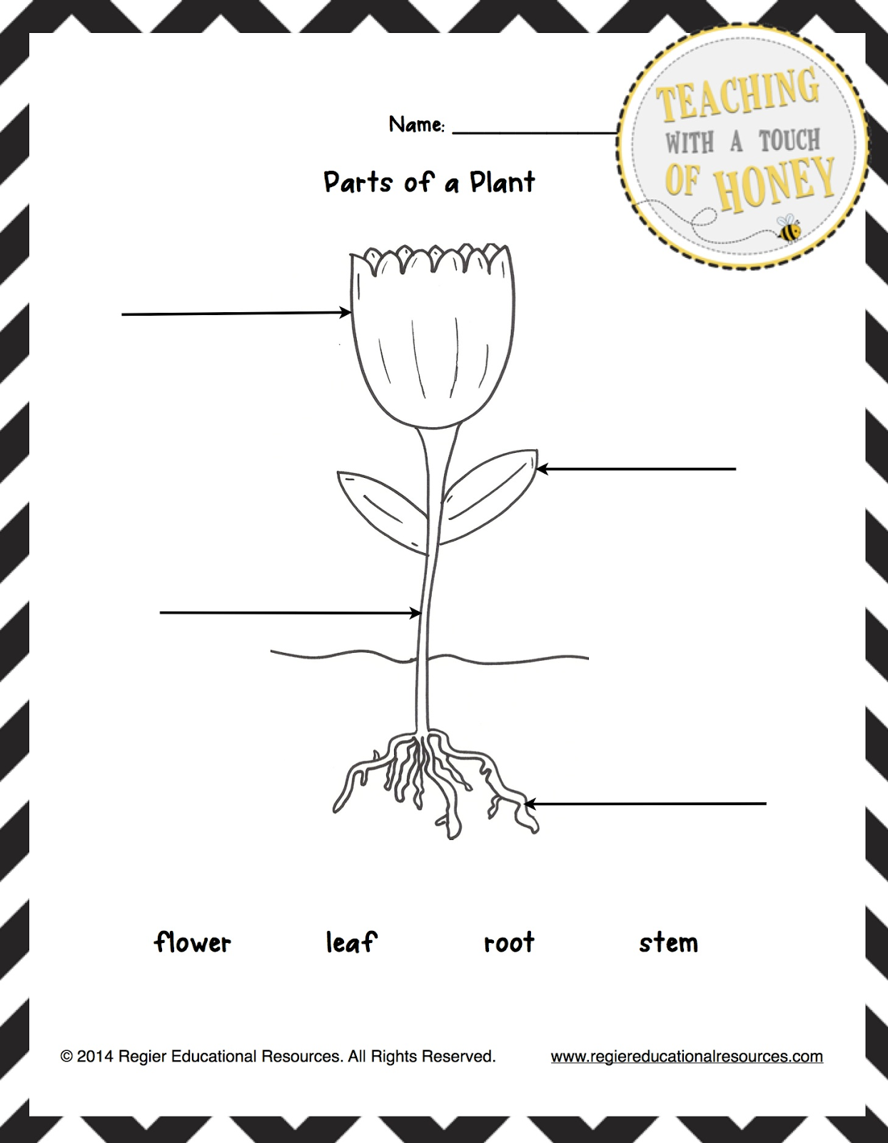 Classroom Freebies Too: FREEBIE! Label the Plant Tiered ...