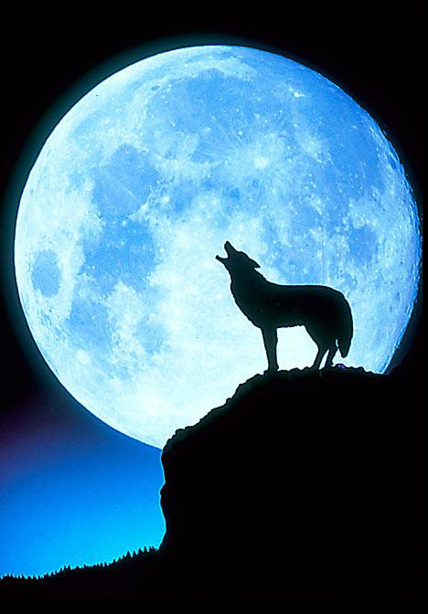 full-moon+coyote.jpg