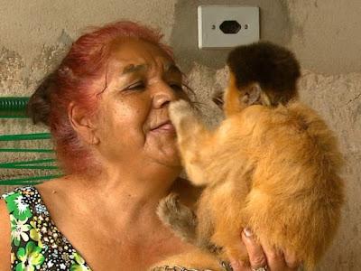 macaco é retirado de familia em sao carlos