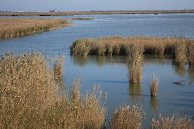 Llacuna de l'Encanyissada in Delta de l'Ebre